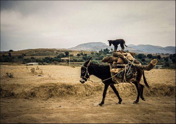 - 1988 Easy Rider (T.M.F 4/10) -