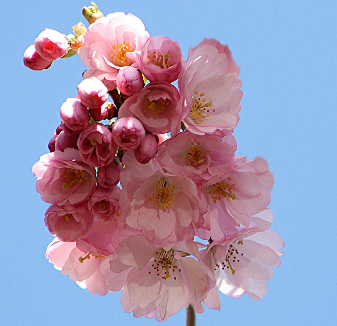1.Blüte