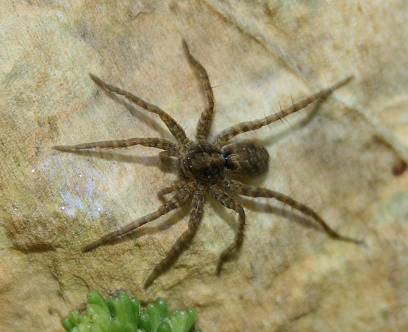 1cent große Spinne am Teich