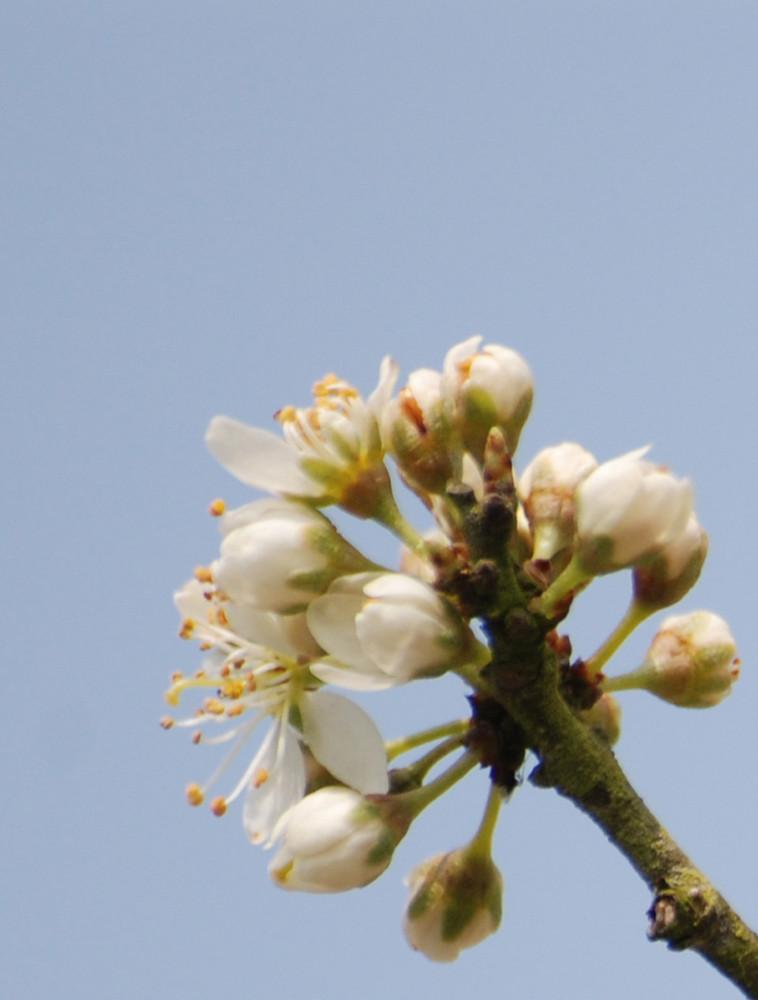 1ère fleurs de printemps