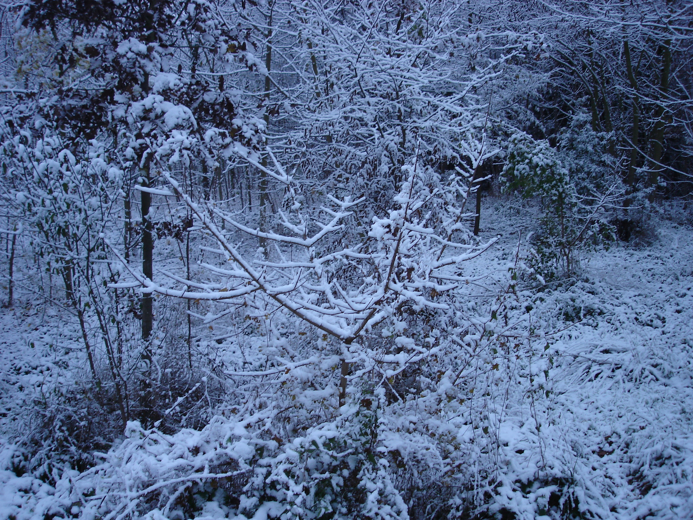 1ére neige bois de Boulogne