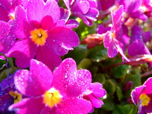 1eres couleurs de printemps