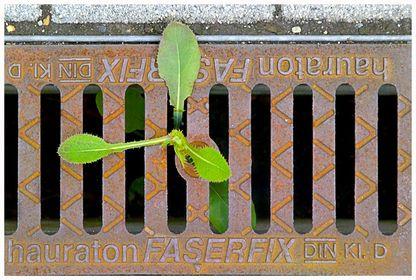07/05 Projekt Pflanzenpioniere