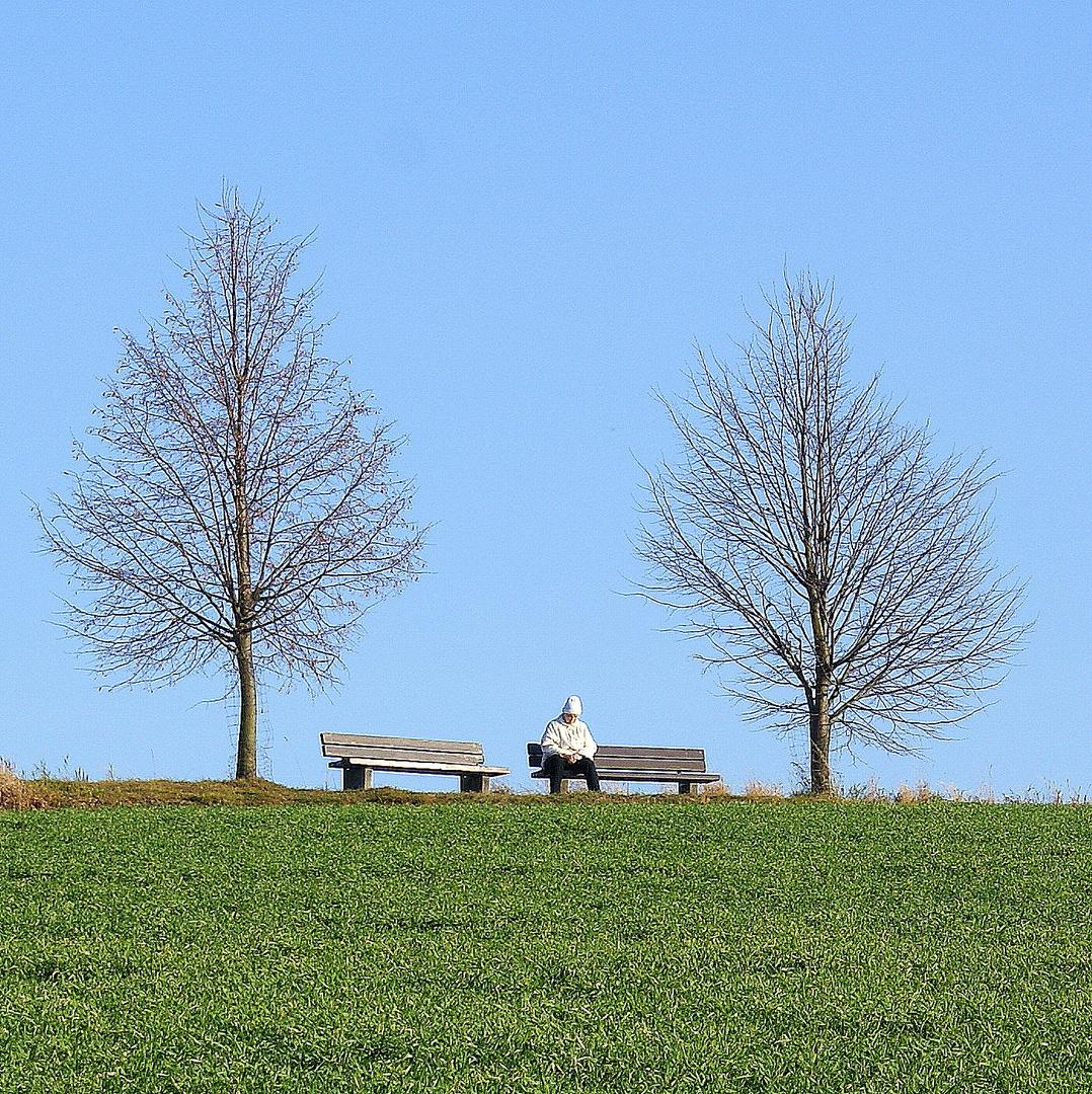 2 Bäume, 2 Bänke, ........ (2)