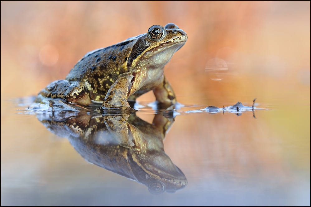 2 be a Frog