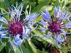 2 Blüten