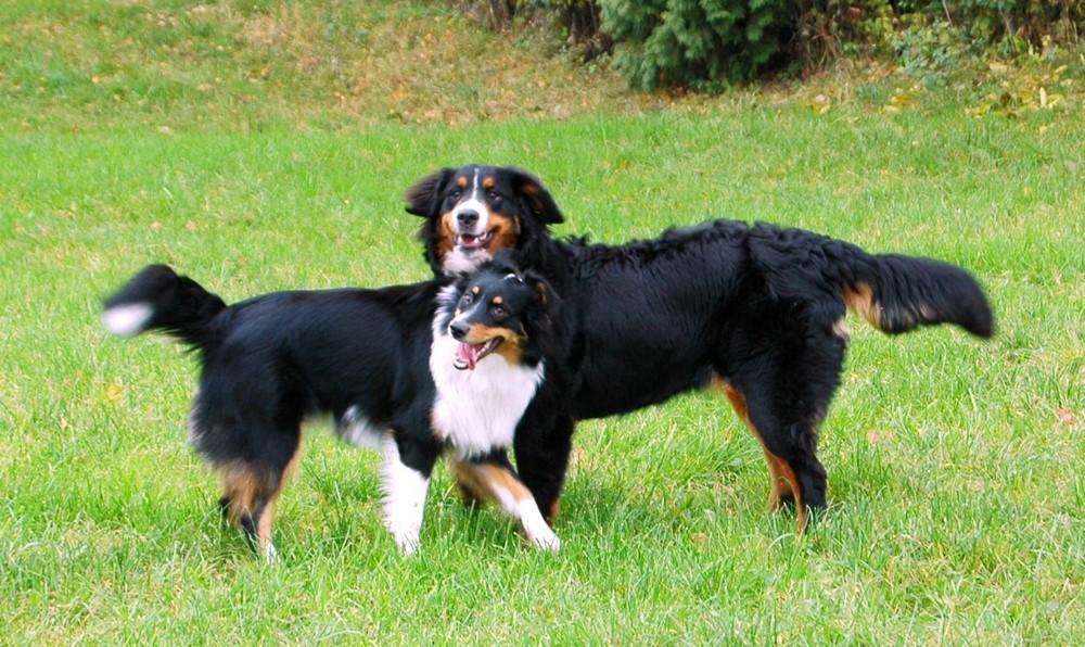 2 Dicke Freunde aus dem Hundeverein
