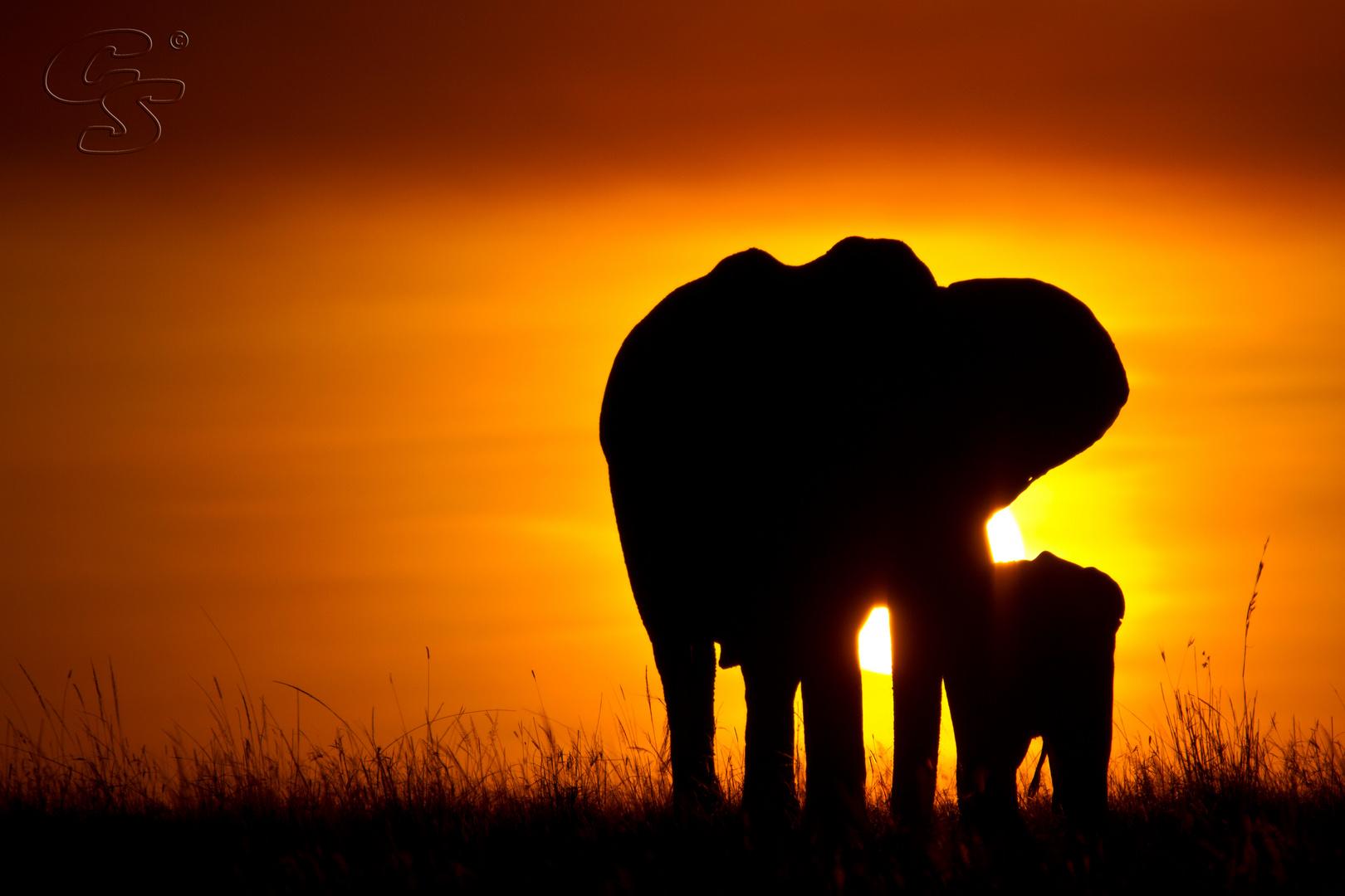 2 elefanten im sonnenuntergang in masai mara foto bild. Black Bedroom Furniture Sets. Home Design Ideas