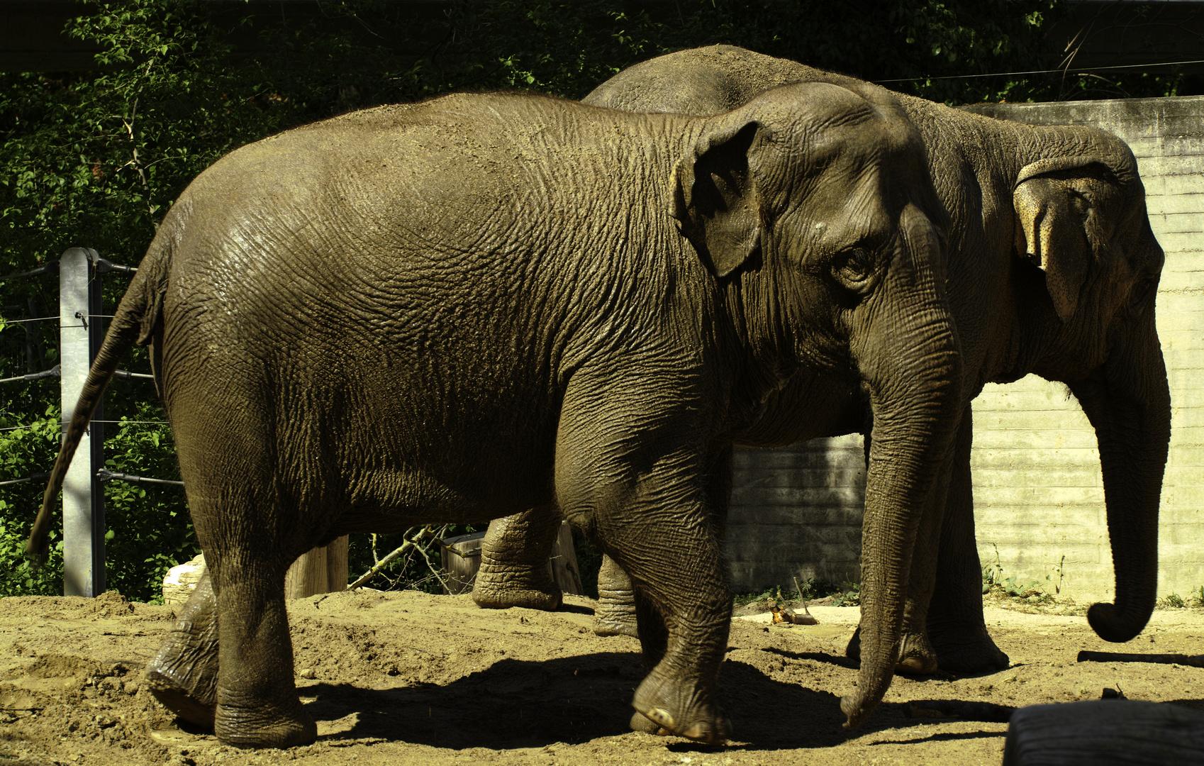 2 Elephanten im Zoo Karlsruhe