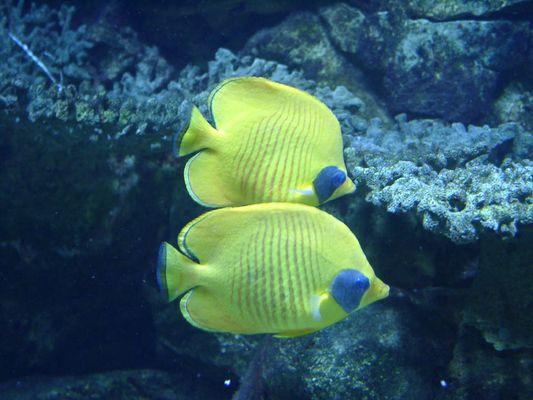 2 Fische ....