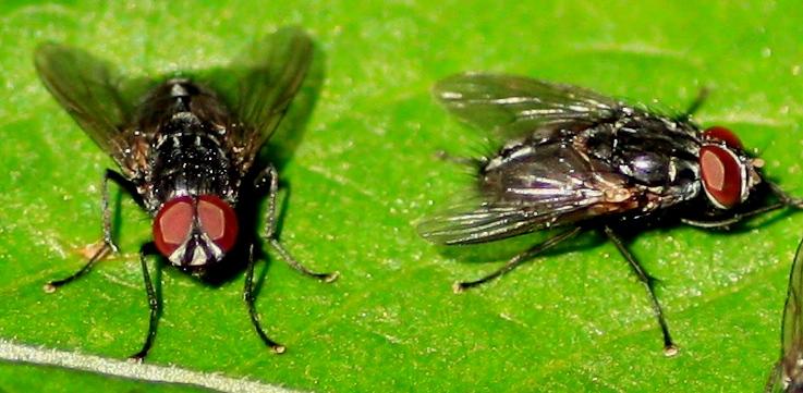 2 Fliegen