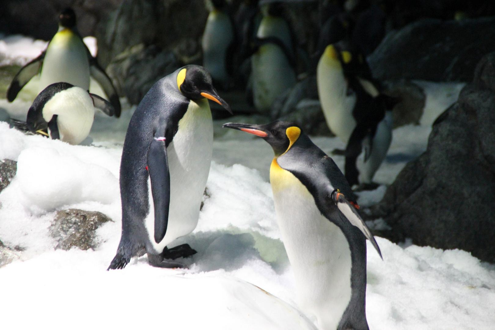 2 Freunde auf dem Eis