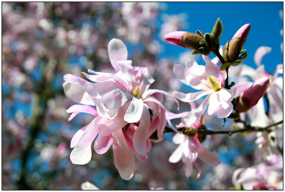 2 Frühling im DFG - Rosa mit Blau