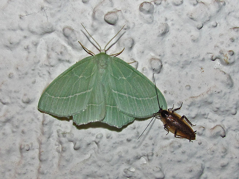 2 grüne Spanner