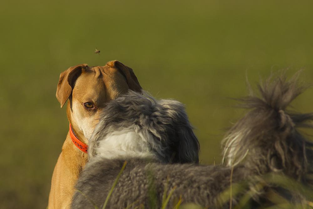 2 Hunde und ein Sumsel