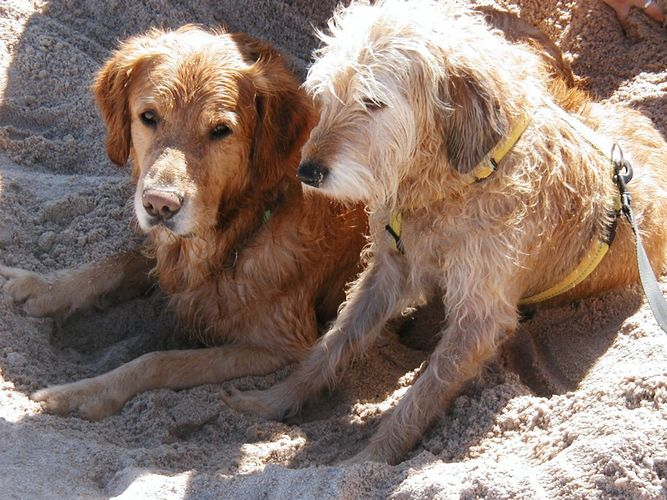 2 im Sand