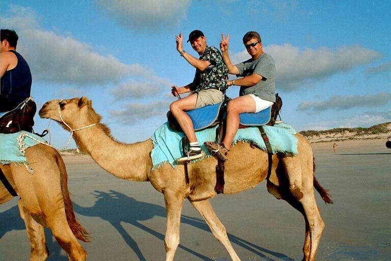 2 Kamele und ein Dromedar