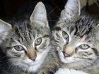 2 Katzenschwestern in Kätzchenalter