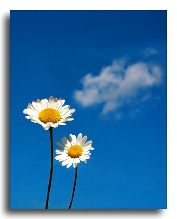 2 kleine blumen und die wolke foto bild natur pflanzen bl ten kleinpflanzen bilder auf. Black Bedroom Furniture Sets. Home Design Ideas