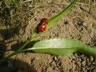 2 kleine Käferchen