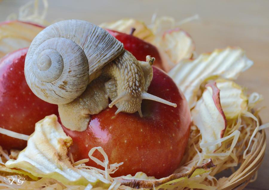 2) .... oder auf meinen Äpfeln