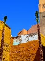 2 palmiers en survie en milieu hostile