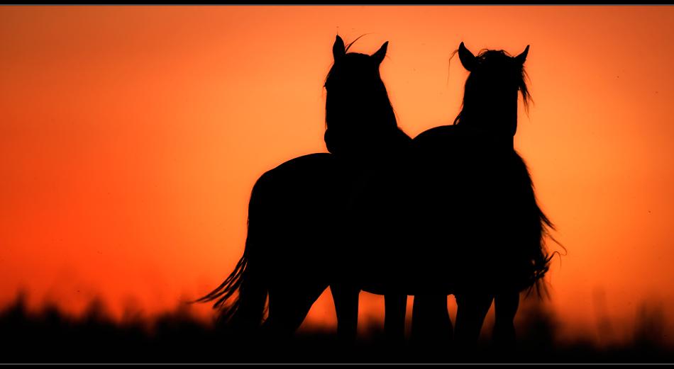 ..2 Pferde II