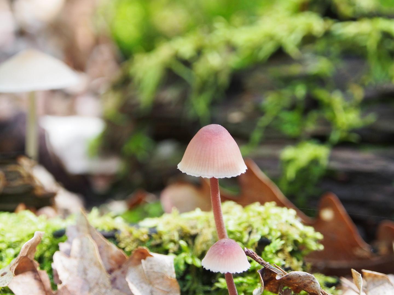 2 Pilze in der Sonne