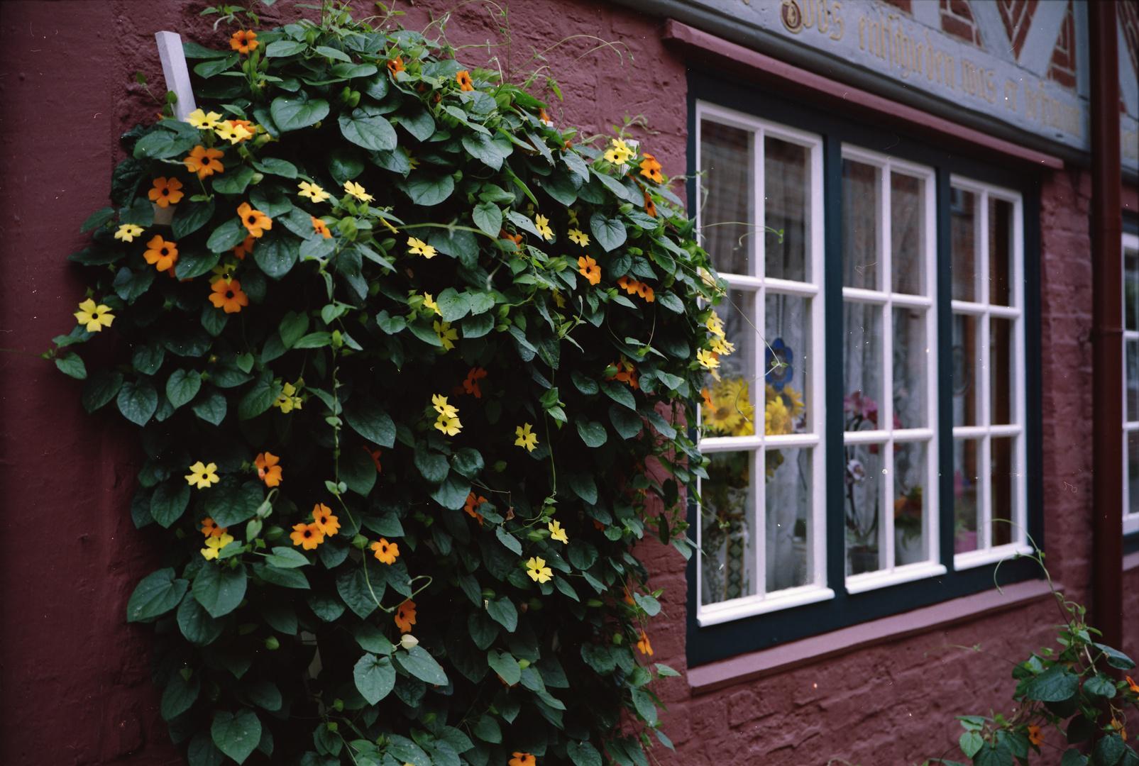 2. Rollfilmkameratreffen Nord Lüneburg Blumen vor Haus