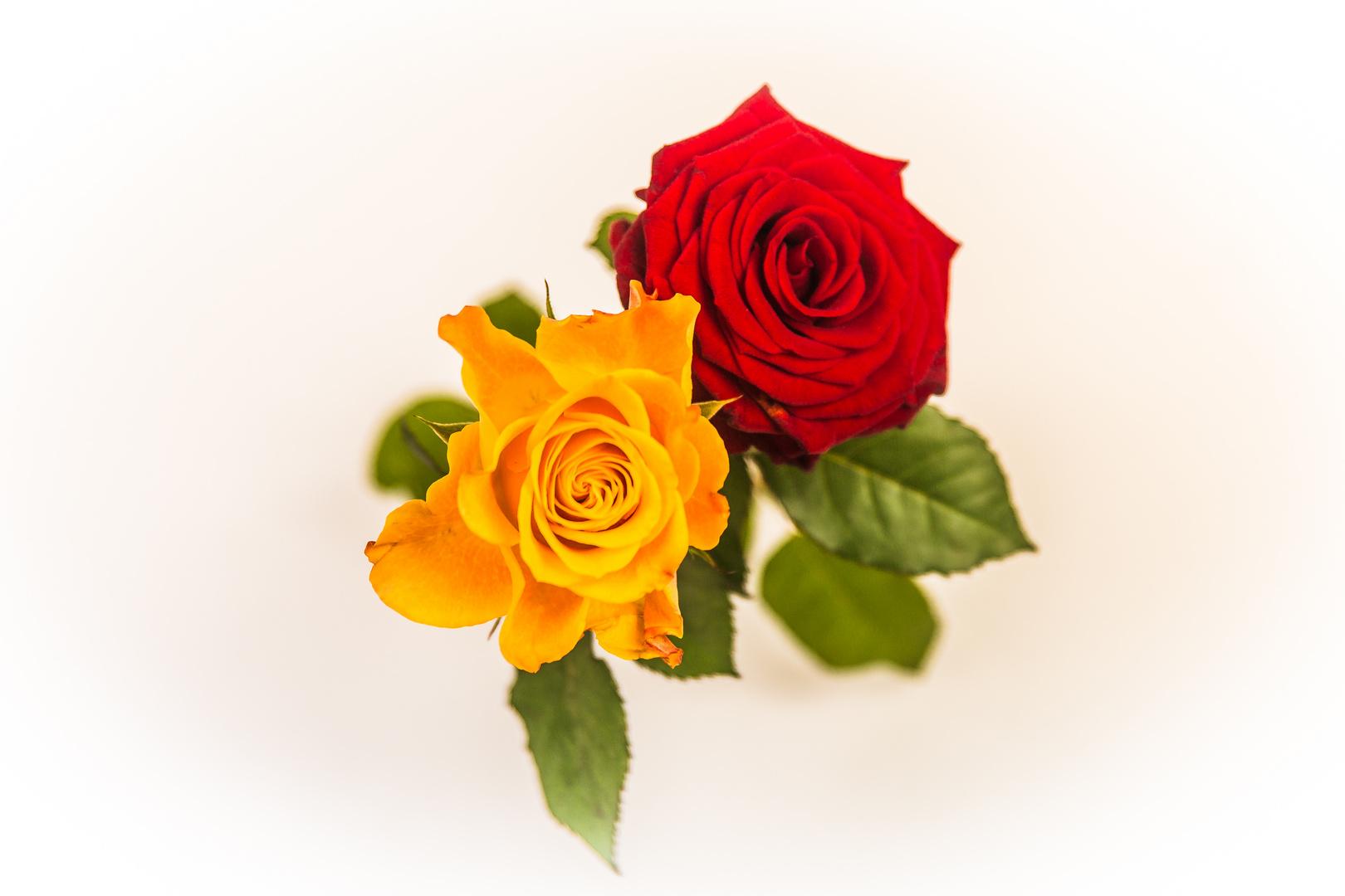 2 Rosen