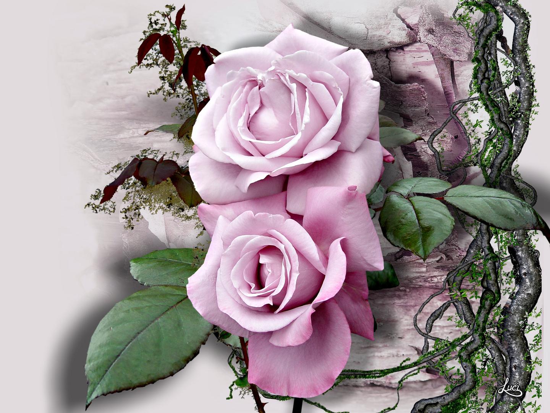 2 Rosen...........