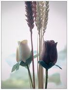 2 roses et 4 épis