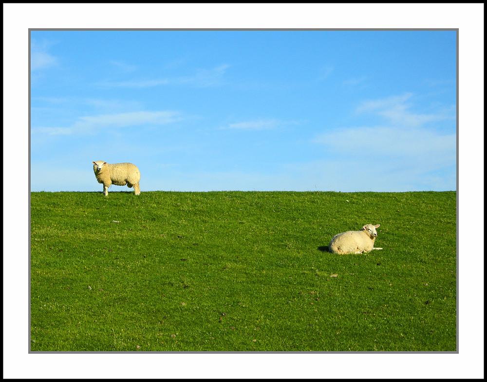 2 Schafe 1 Deich