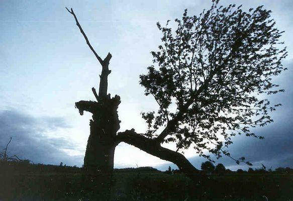 #2 Schiefer Baum von Katzenrüti
