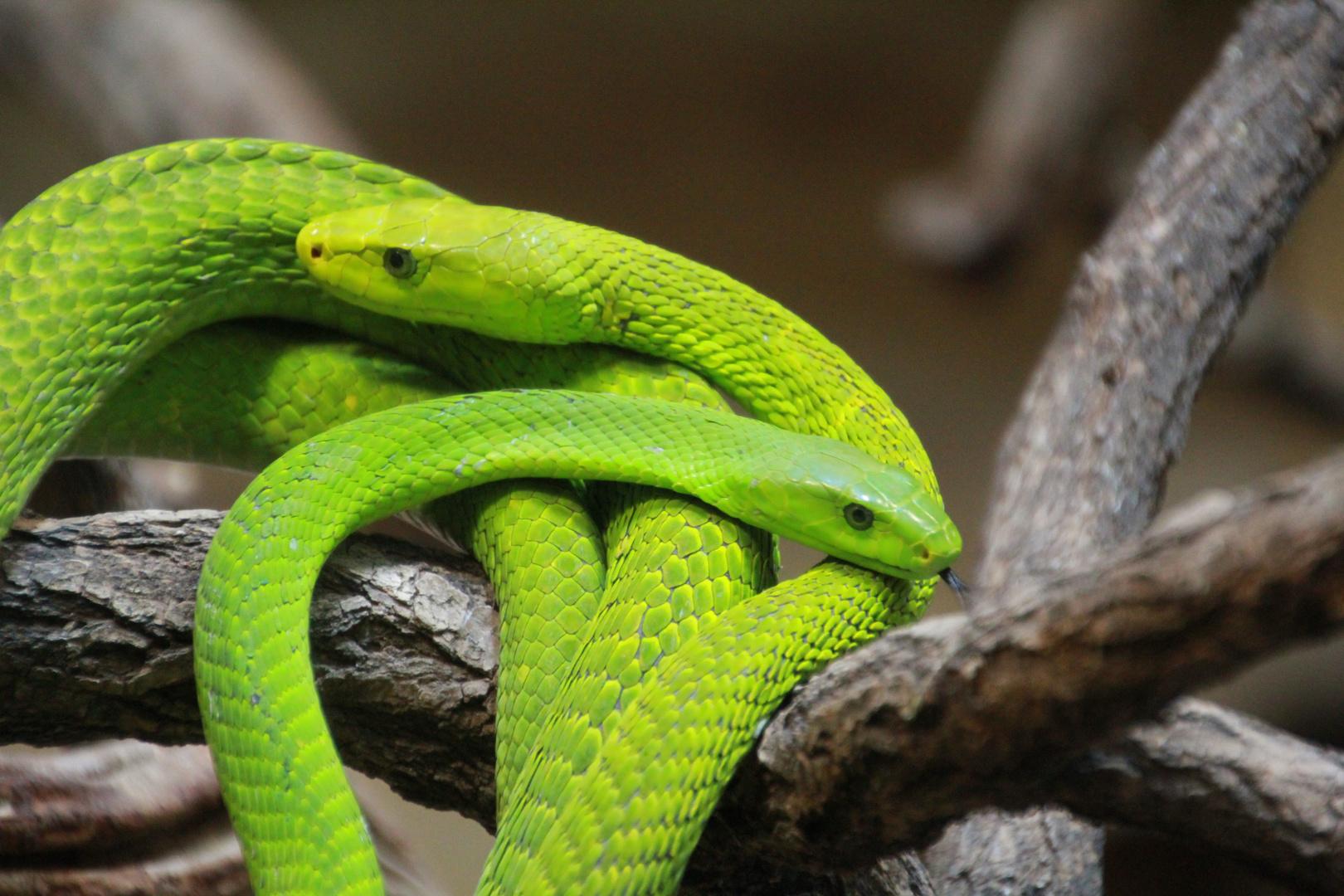 2 Schlangen
