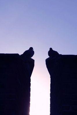 2 Tauben auf den Zinnen des Ehinger Tors