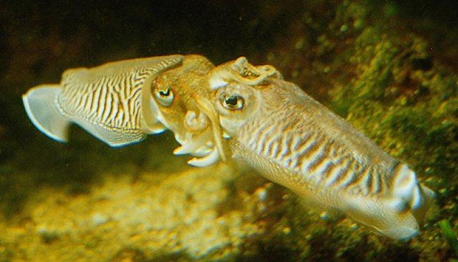 2 Tintenfische