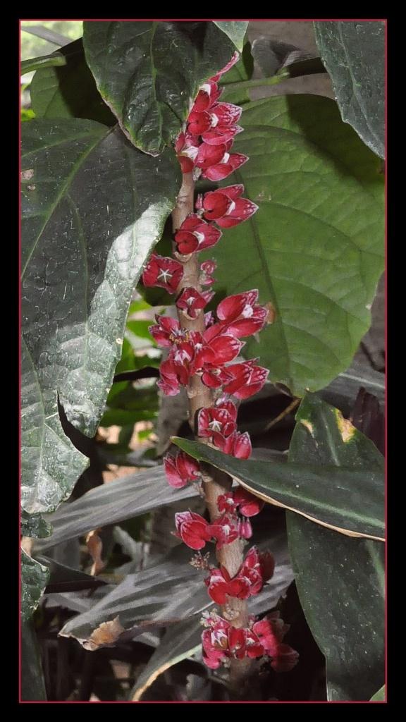 2 unbekannte wunder schöne Blüte