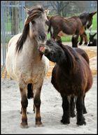 2 ursprüngliche Pferde