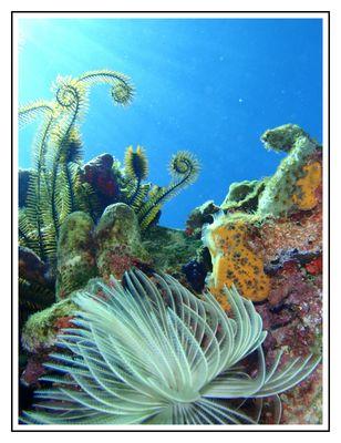 20 000 fleurs sous les mers...