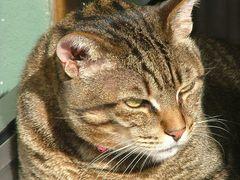 2005...sguardo felino.