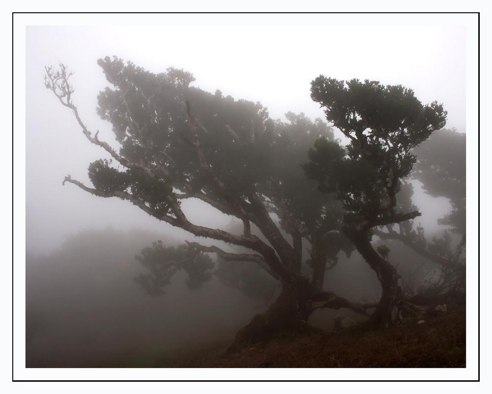 2006 Madeira