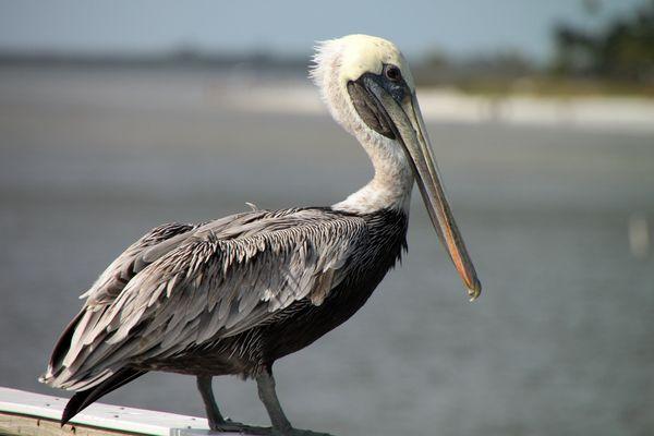 2009 - Florida 1025