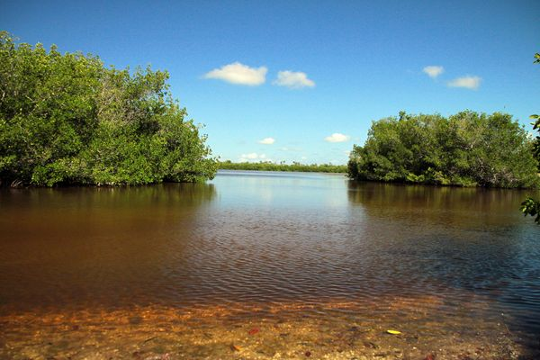 2009 - Florida 1118