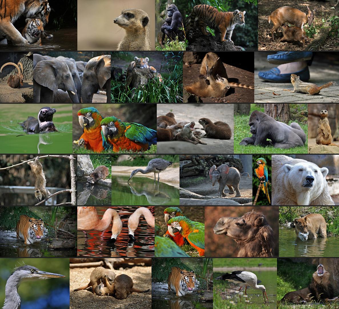 2011 - Ein tierisches Jahr