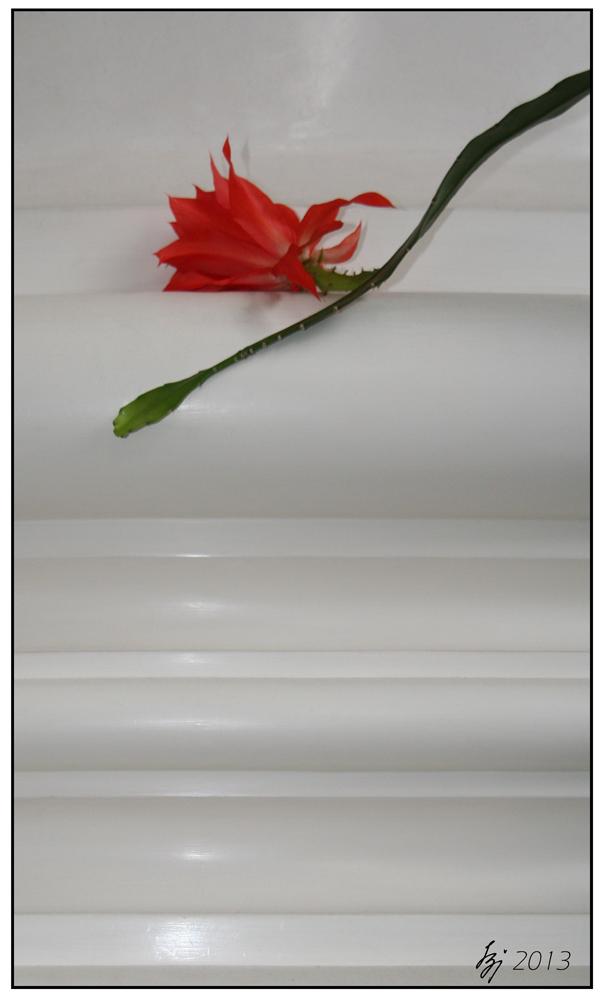2013 St.Blasien - Ein Kaktus im Dom