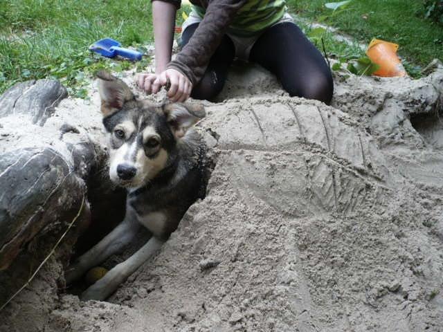 20130824 Schildhund