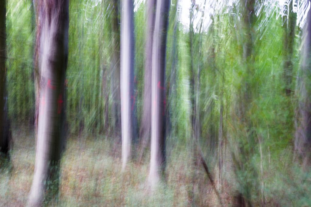 201309 - Bäume