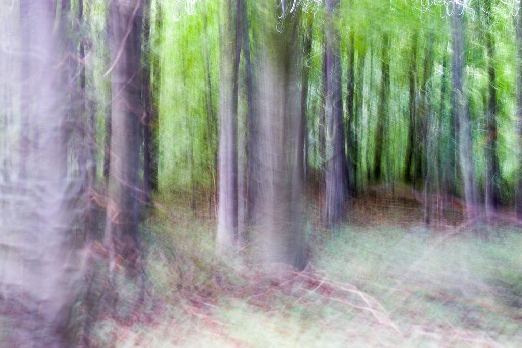 201309 - Bäume 2