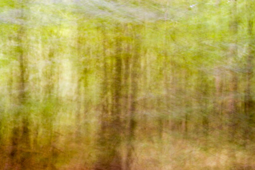 201309 - Bäume 5